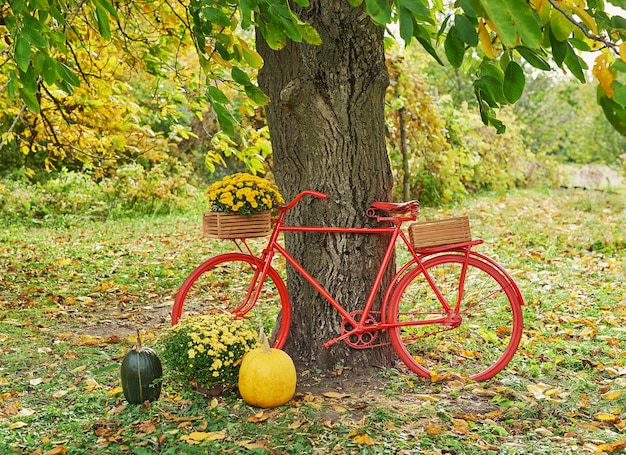 Czerwony rower z kwiatami. jesienne zbiory tarasowe tło. halloween. kraj. dynie i kwiaty. dom wakacyjny. święto dziękczynienia