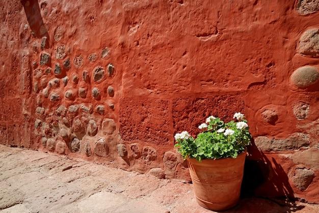 Czerwony stary surowy kamienny mur z doniczkową białą begonią wewnątrz klasztoru santa catalina, arequipa, peru