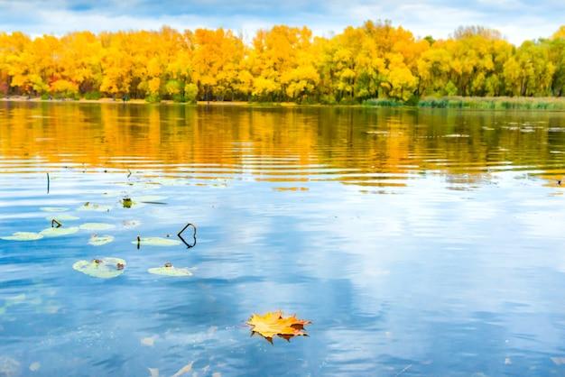 Czerwony suchy liść na wodzie jeziora z jesiennym lasem z drzewami pomarańczowymi na brzegu rzeki