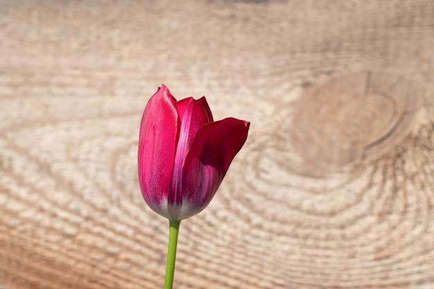 Czerwony świeży tulipanowy kwiatu okwitnięcie na drewnianym tle