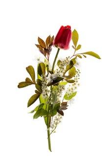 Czerwony tulipan i czeremcha drzewo kwiaty na białym tle. kompozycja świeży bukiet wiosenny.