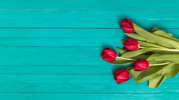 Czerwony tulipan kwitnie na zielonym tle