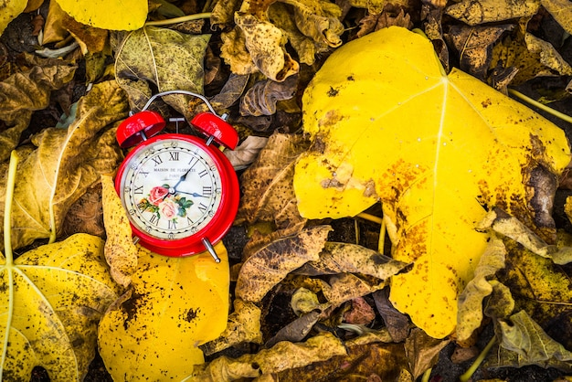 Czerwony zegar vintage w żółtych liści jesienią