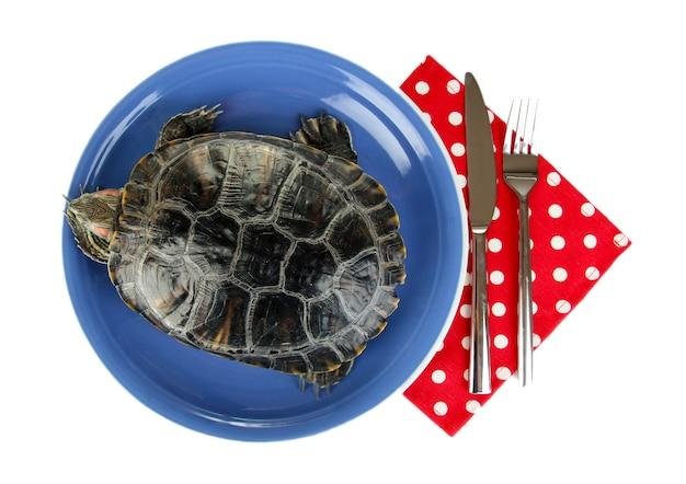 Czerwony żółw ucha na talerzu na białym tle
