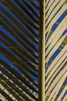 Część liści palmowych w cieniu, druga część nasłoneczniona, abstrakcyjna zielona tekstura