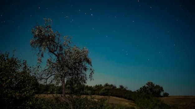 Część starego lasu łąkowego na wczesnym porannym niebie