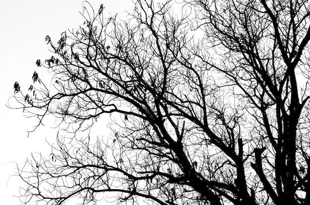 Część sylwetka martwego drzewa bez liści na białym tle