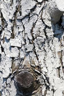 Części pnia drzewa z korą dla ochrony