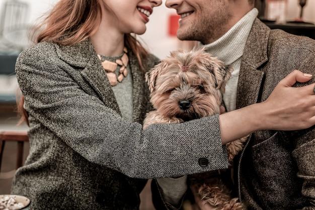 Członek rodziny. yorkshire terrier siedzi w rękach przytulających się właścicieli