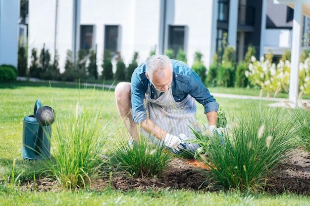 Człowiek i gleba. brodaty siwy mężczyzna w niebieskiej koszuli i pasiastym fartuchu wzbogacający glebę po posadzeniu kwiatów
