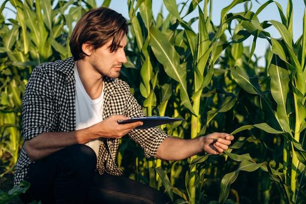 Człowiek na polu z kukurydzą. koncepcja rolnictwa. młody agronom monitoruje wzrost kukurydzy.