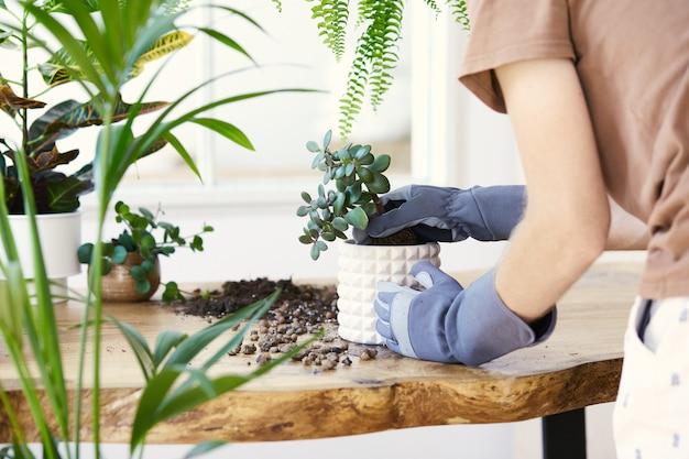 Człowiek ogrodnicy przesadzania roślin w ceramicznych doniczkach na drewnianym stole projekt. koncepcja ogrodu przydomowego. wiosna. stylowe wnętrze z dużą ilością roślin. dbanie o rośliny domowe. szablon.