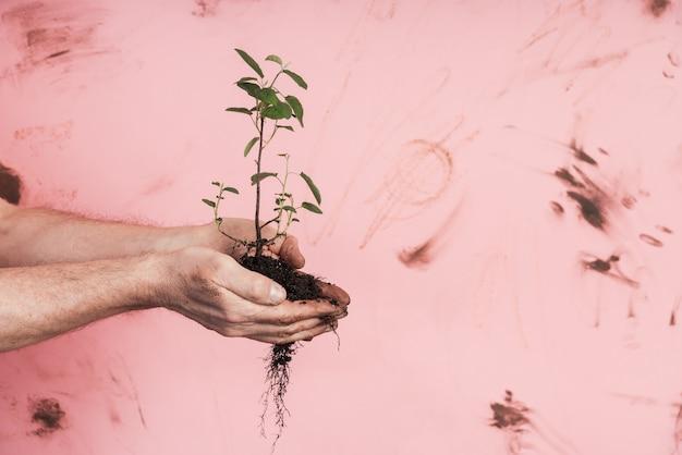Człowiek posiadający świeżą zieloną roślinę
