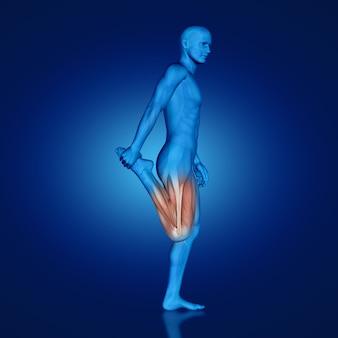 Człowiek rozciąganie mięśnia czworogłowego
