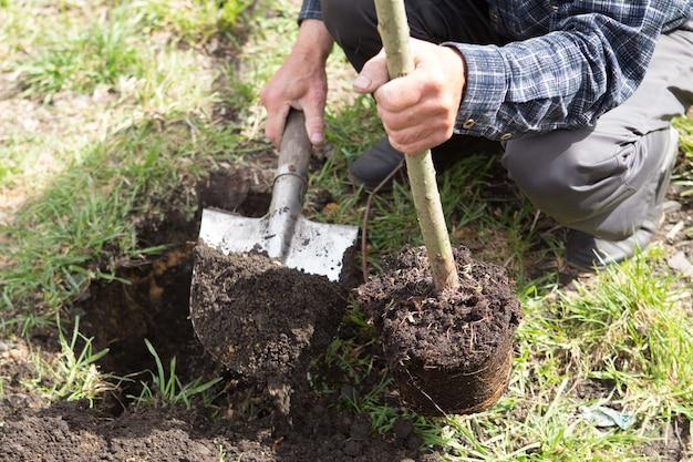 Człowiek sadzi małe drzewo, ręce trzyma łopatę kopie ziemię, naturę, środowisko i koncepcję ekologii