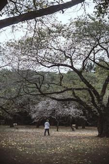 Człowiek stojący na ziemi między drzewami w ciągu dnia