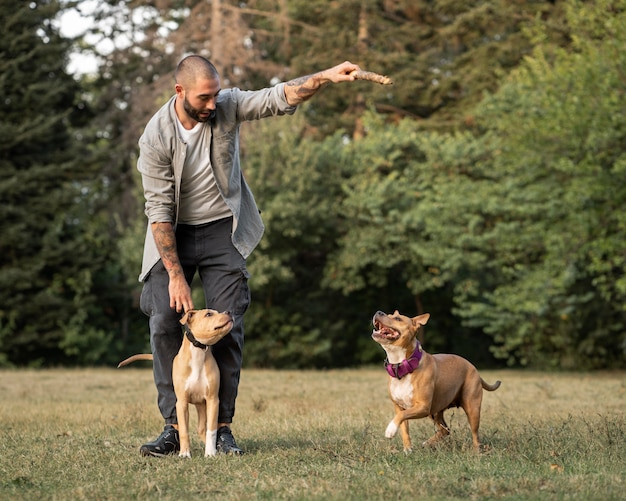 Człowiek trenujący swoje psy pitbull