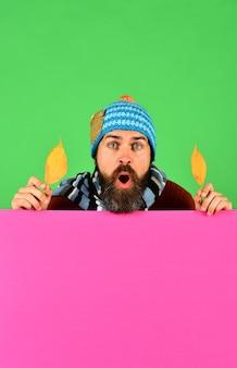 Człowiek w ciepłym kapeluszu trzyma liście wiśni na zielonym i różowym tle, miejsce. koncepcja sezon jesień i opadłych liści. hipster z brodą i zdziwioną twarzą nosi ciepłe ubrania. pomysł na październik