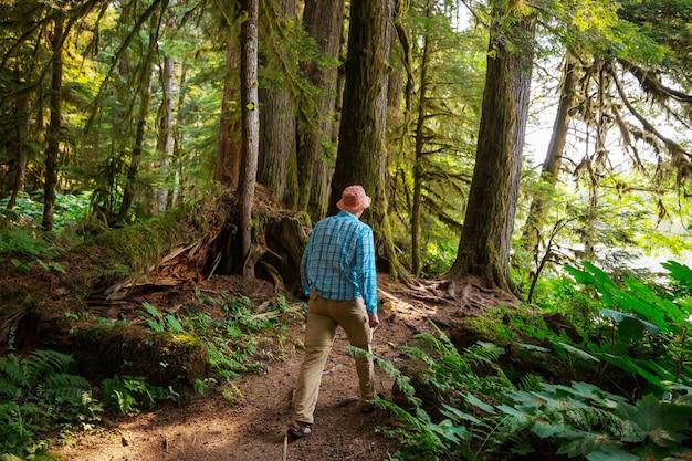 Człowiek w zatoce szlakiem w lesie.
