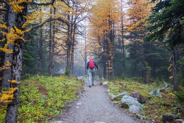Człowiek wędrówki w kanadyjskich górach. wycieczka to popularna forma rekreacji w ameryce północnej. istnieje wiele malowniczych szlaków.