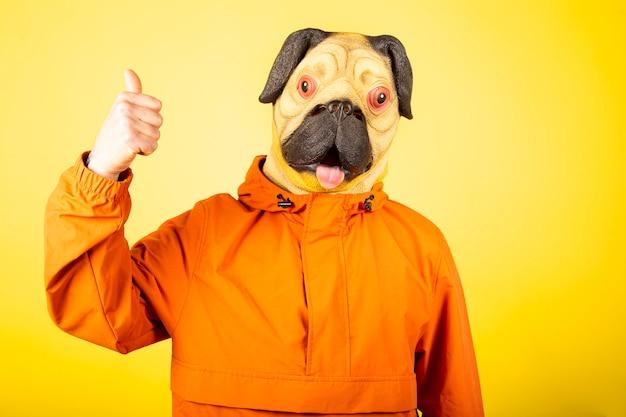 Człowiek z maską psa mops na białym tle na żółtej ścianie. gest człowieka ze znakiem zatwierdzenia, dobry uczynek.