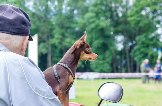 Człowiek z psem rasy terier rosyjski zabawki na motocyklu