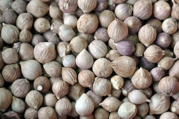 Czosnek jest łatwy w uprawie i może być uprawiany przez cały rok w łagodnym klimacie.
