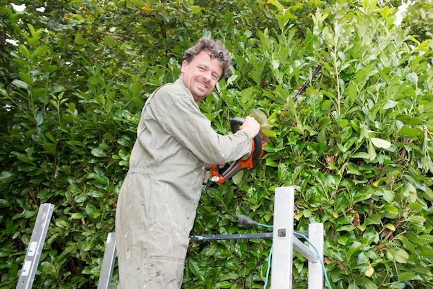 Czterdziestoletni mężczyzna w ogrodzie, cięcie zielonego żywopłotu