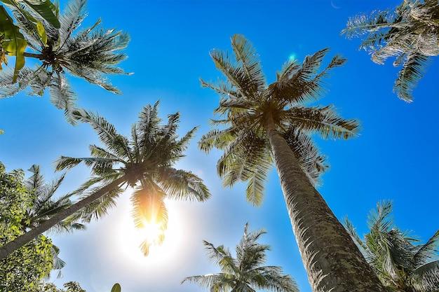 Cztery palmy kokosowe z błękitnym niebem i słońcem przebijającym się przez gałęzie piękny tropik