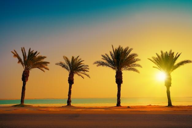 Cztery palmy nad brzegiem morza martwego o zachodzie słońca