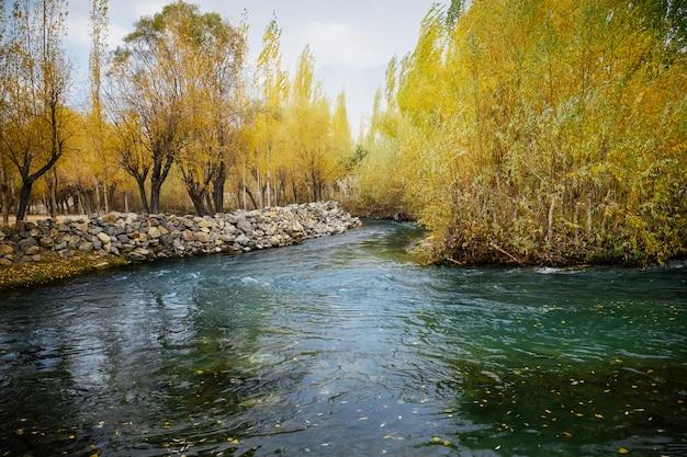 Czysta woda potoku przepływającego przez kolorowy gaj liściowy w sezonie jesiennym.