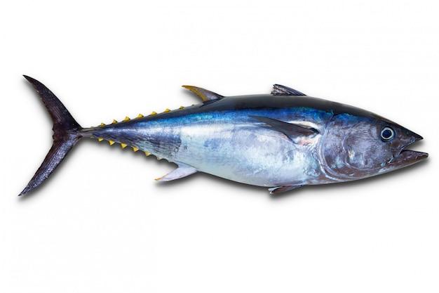 Czysty tuńczyk naprawdę świeży na białym