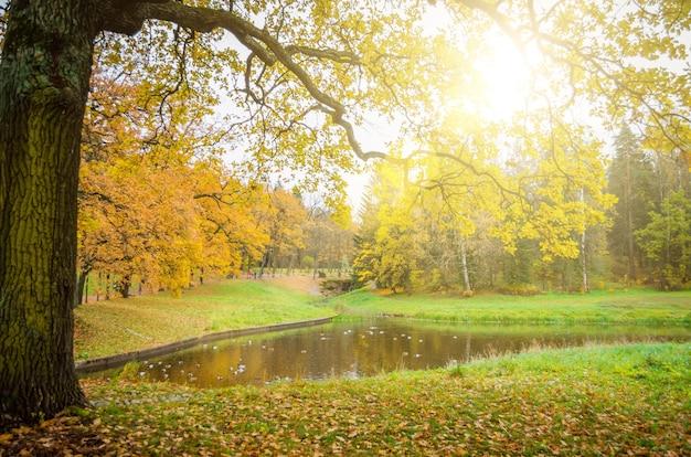 Dąb gałąź dębu nad jeziorem w jesiennym parku.