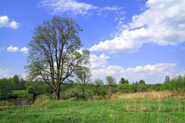 Dąb na polu wiosny