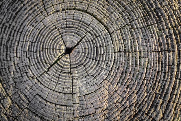 Dąb naturalny węzeł struktura teksturowane