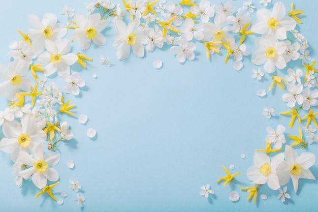 Daffodils i wiśni kwiaty na błękitnym tła tle