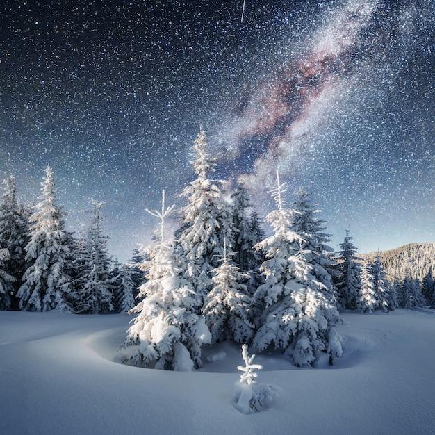 Dairy star trek w zimowym lesie. dramatyczny i malowniczy sc