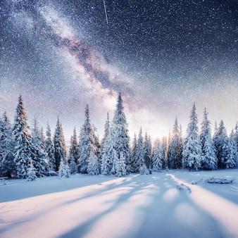 Dairy star trek w zimowym lesie.
