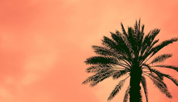 Daktylowa palma przeciw kolorowemu zmierzchu niebu.