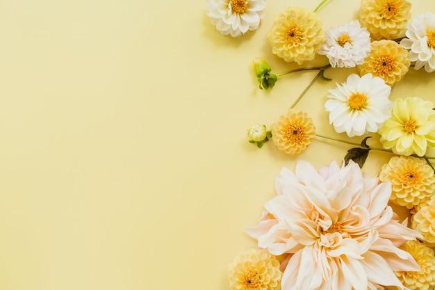 Dalie pomarańczowo-białe kwiaty na pastelowym żółtym tle. kompozycja kwiatów. leżał na płasko, widok z góry, miejsce na kopię. koncepcja lato, jesień.