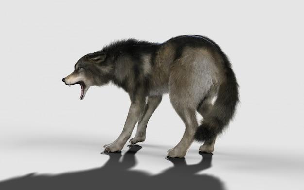 Danger wolf animal