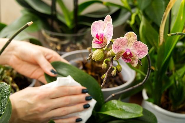 Dbanie o rośliny podlewając je specjalnym płynem
