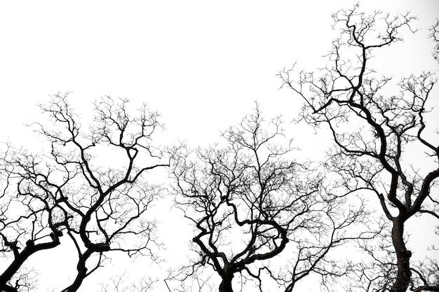 Dead of tree. jest to liść drzewa już przewróconego.