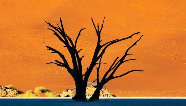 Deadvlei w parku narodowym namib-naukluft sossusvlei w namibii - dead camelthorn drzewa przed pomarańczowymi wydmami z błękitnego nieba.