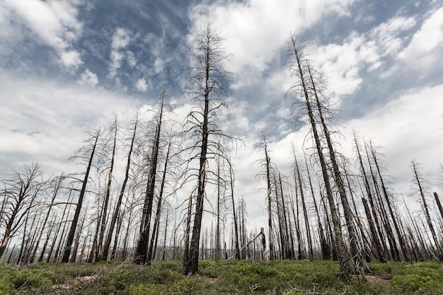 Deadwood, krajobraz środowiska ekologia.