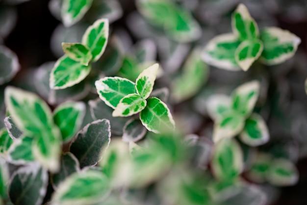 Defocused kwiecisty tło z liśćmi