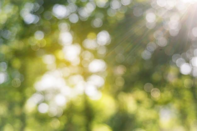 Defocused zieleń liście w lesie z słońce promieniem, abstrakcjonistyczny bokeh tło.
