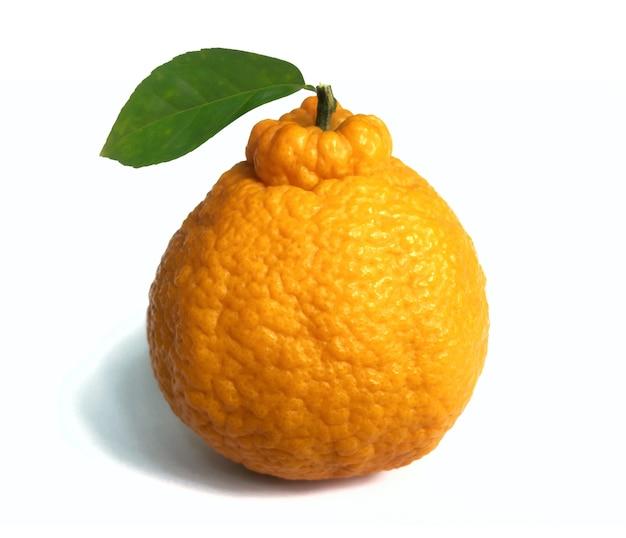 Dekopon japońskie owoce cytrusowe na białej powierzchni.