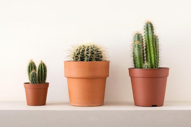 Dekoracja Domu Z Zielonych Kaktusów W Brązowych Doniczkach Premium Zdjęcia