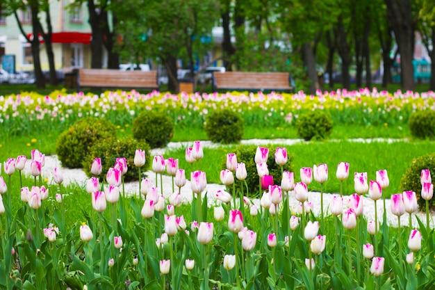 Dekoracja kwietnika w parku miejskim